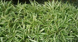 推荐几种净化室内空气的植物