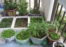 阳台菜园设备应如何选购