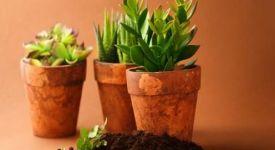 种植绿色植物 要注意风水禁忌