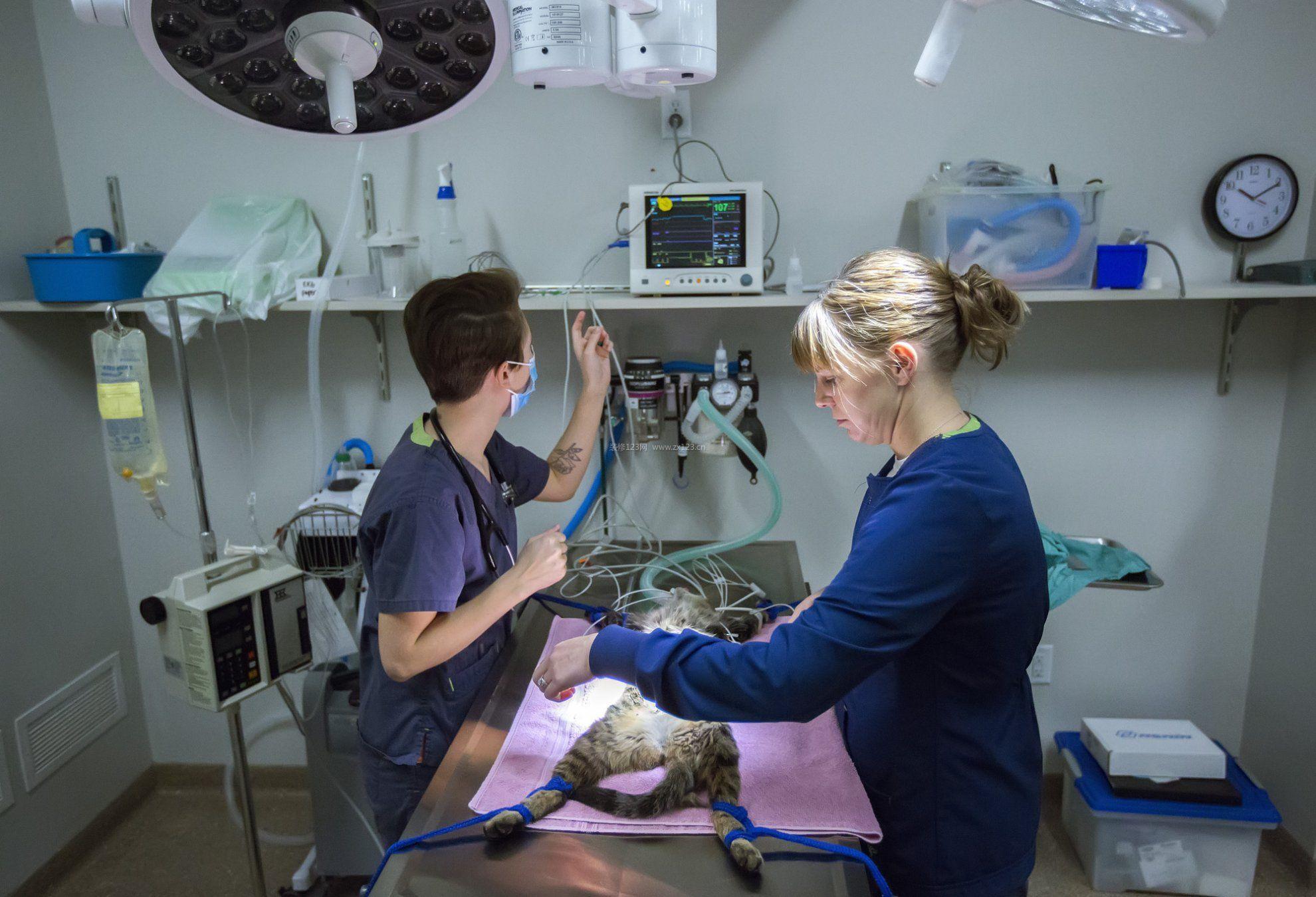 动物医院手术室装修设计效果图欣赏