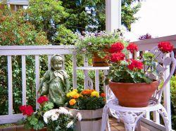 家庭小陽臺花架圍欄圖片