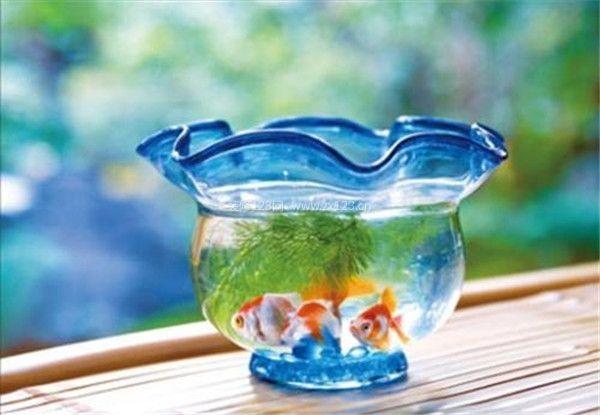 金鱼缸风水