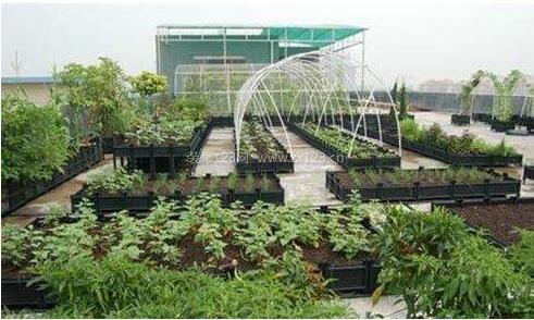 屋顶农场的排水
