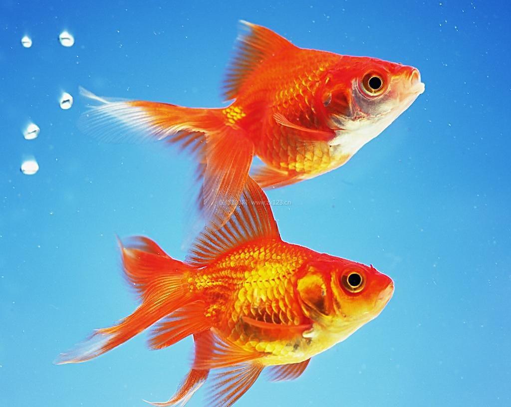 布艺金鱼做法图解