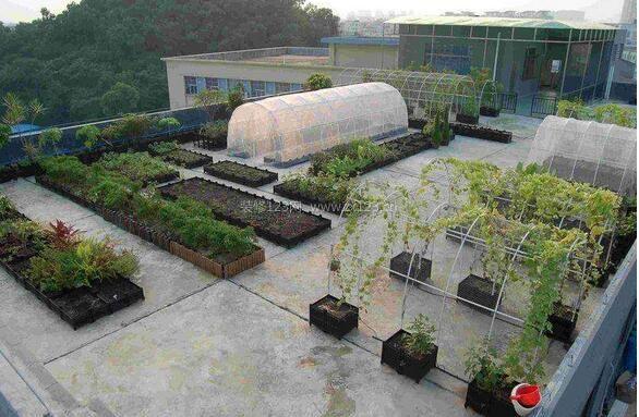 屋顶农场怎么建