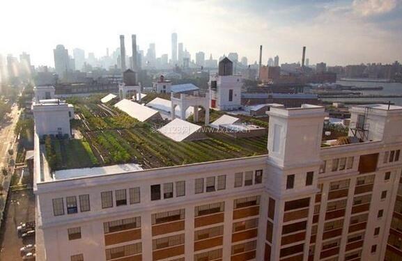 屋顶农场案例
