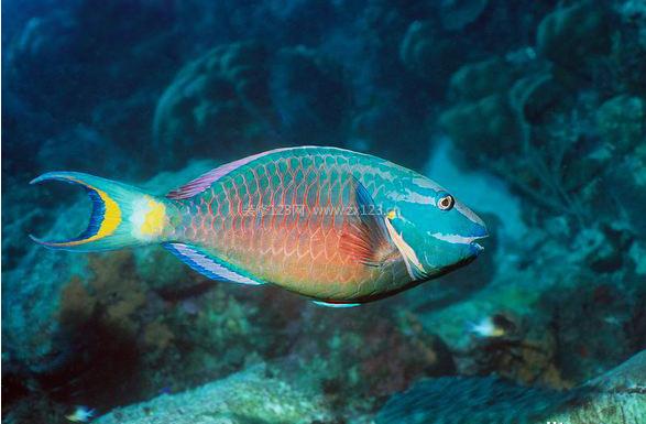 鱼身有花纹是什么鱼