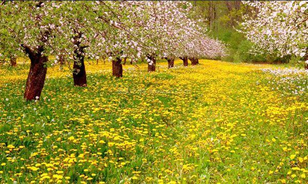 春分節氣養生知識