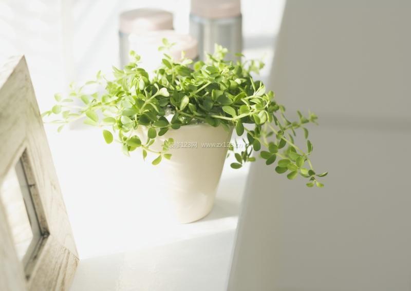 绿色植物对家居环境的作用