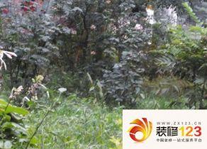 华裕花园二期