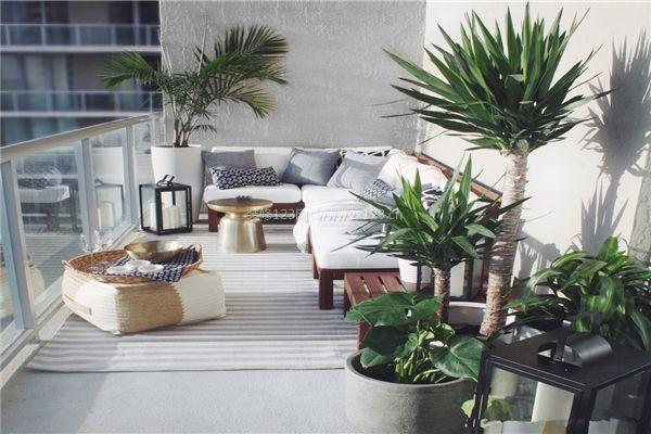 阳台植物摆放禁忌
